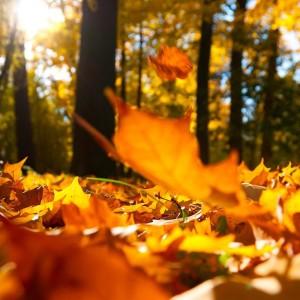 hd-herfst-achtergronden-close-up-foto-van-oranje-herfstbladeren-op-de-grond-hd-herfst-wallpapers